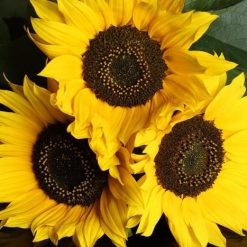 SUNFLOWER SEEDS-[best_gifts_for_women]-[gifts_for_her]-Seventeen Minutes